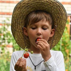 Врач рассказал, что делать, если ужалила пчела, а ребенок наелся немытых ягод с грядки