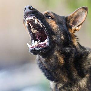 Осторожно, злая собака! Что делать, если вас покусали?