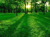 Зеленый мир!