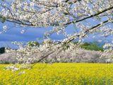 Приход весны