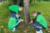 Земля с родины Ломоносова высыпается под голубую ель возле памятника ученому