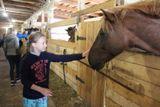 """Посещение конного двора """"Мезенка"""""""