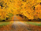 Оранжевая дорога