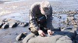 Изучение питания полуводных млекопитающих (Олейников А. Ю.)