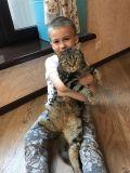 У Максима Будника есть ещё любимец - кот Стёпа