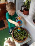 Дима выращивает зелёные витамины для животных детского сада