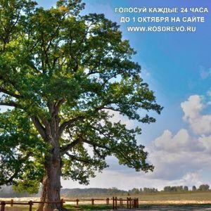 Конкурс «Российское дерево года»