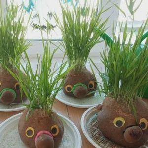 Проект «Травянчики»