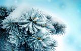 Ветка под снегом
