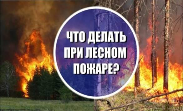 https://cdo-gloria.edu.yar.ru/distantsionnie_materiali/chto_delat_pri_lesnom_pozhare_w400_h225.jpg