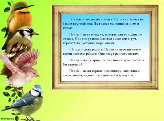 https://cdo-gloria.edu.yar.ru/distantsionnie_materiali/eko_urok_beregite_ptits/ptitsi3_w700_h525.jpg