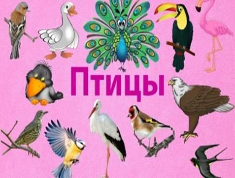 https://cdo-gloria.edu.yar.ru/distantsionnie_materiali/eko_urok_beregite_ptits/ptitsi4_w400_h225.jpg