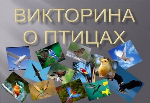 https://cdo-gloria.edu.yar.ru/distantsionnie_materiali/eko_urok_beregite_ptits/ptitsi7_w500_h375.jpg