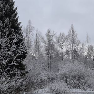 "Онлайн-фотовыставка ""Зимнее волшебство"""