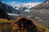 """Посси. Новицкий Дмитрий. Опоссум Посси, совершивший с нами трекинг к леднику Тасмана. Номинация """"Природа гор""""."""