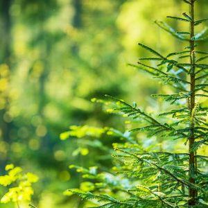 SKBIC joins a Nordic partnership on bio-ecomony