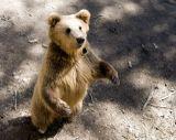 """Три медведя"""