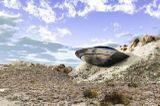 Заезды в песчаных карьерах
