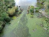 Устье реки Верхняя Седокса  - сточные воды от КОС Олонца