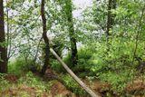 Выпуск в реку Видлица