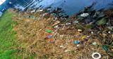 Каждый день я катаюсь на велосипеде. Мне нравится это место, если не считать мусора: весь берег загрязнен мусором, который остался от пикников.