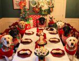 В это Рождество пара решила устроить торжественный обед и для своих любимцев, накрыв для них отдельный стол. Выяснилось, что собаки тоже любят праздники — только взгляните, как смирно они сидят!