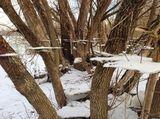 4. Неожиданный эффект: прошедший через лес поток оставил после себя следы. Это обычная фотография без использования фотошопа, автор — Willyyz.