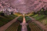 15. Цветение сакуры в Японии. Фотограф Agustin Rafael Reyes.