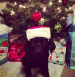 Когда фотографии питомцев Келли и Зака разлетелись по интернету, пользователи стали делиться снимками своих щенков, которые тоже ждут не дождутся Рождества.