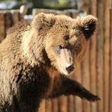"""Зоокомплекс """"Три медведя"""""""